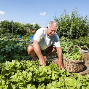 Man at Urban vegetable garden