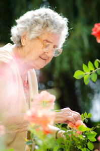 Senior woman with garden roses